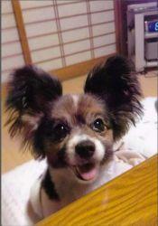 ミニーの写真3