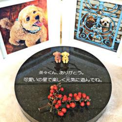 茶々丸のお墓2
