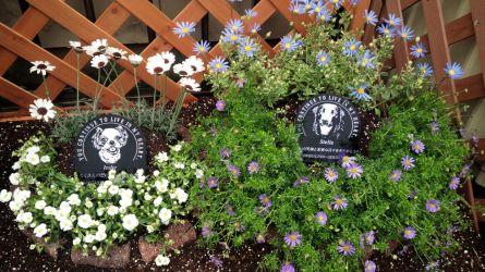 ステラとインディーのお墓