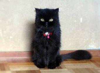 Hanakoの写真